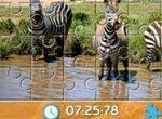 Пазл: Зебры Южной Африки
