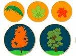 Изучай деревья, ягоды и цветы