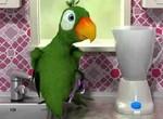 Говорящий попугай Пьер хулиганит на кухне