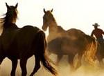 Пазл-пятнашки: Ковбой на лошади